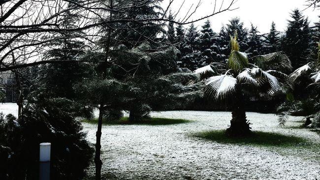 Winter Wonderland Amazing View I Love Snow❄❄