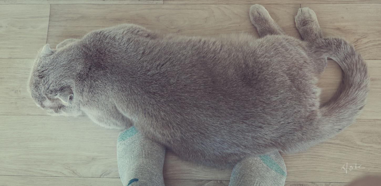 warm. Cat♡ Warm EyeemKorea With Cat Homephotography