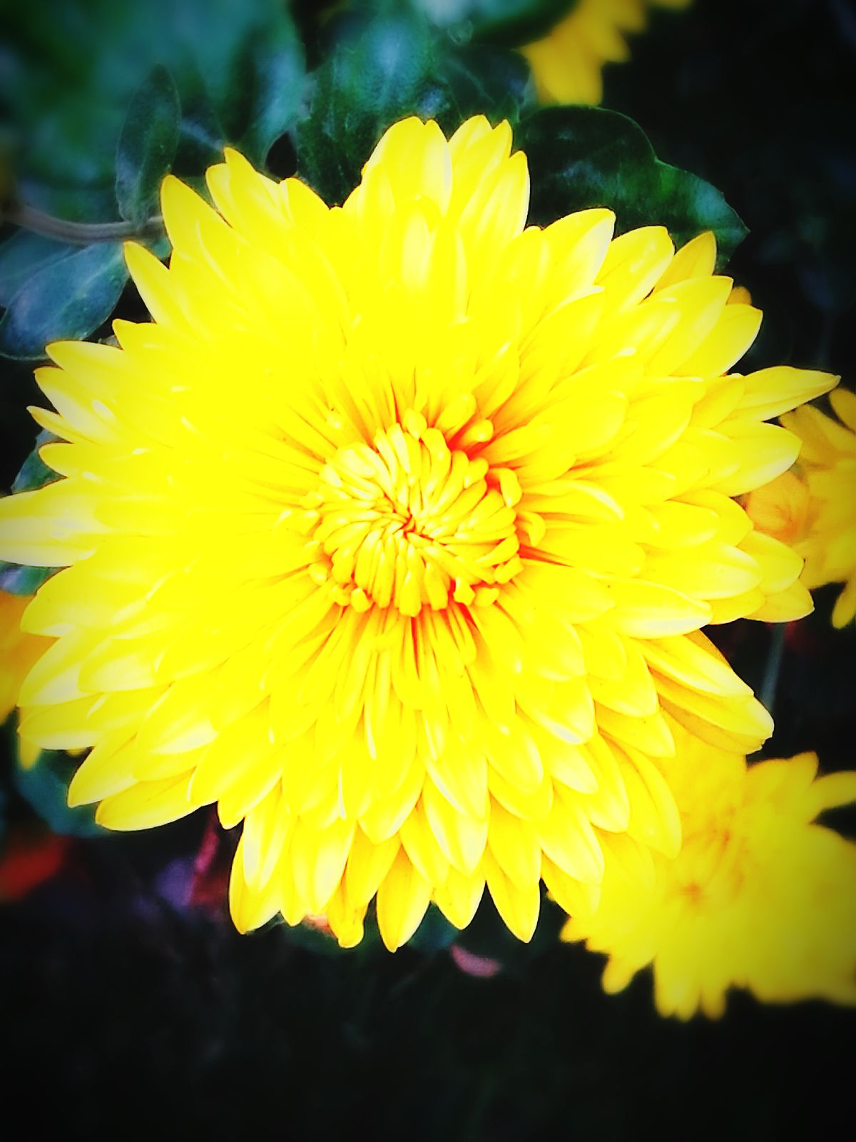 Ммм ммммм... Flower Yellow Fragility Freshness Nature Petal Beauty In Nature