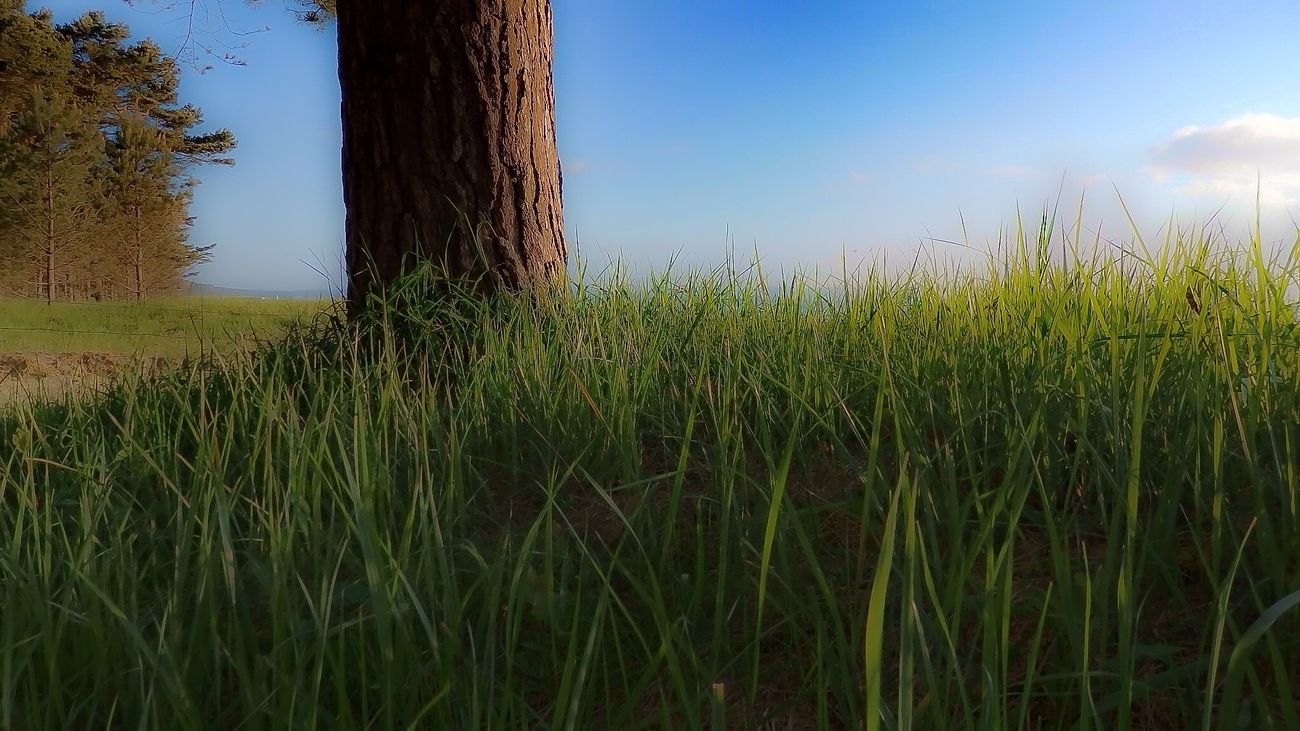 Todays sunrise 😎 EyeEm Best Shots - Sunsets + Sunrise EyeEm Nature Lover Insel Rügen Ostseebad Binz Beach Photography Sunrise Hugging A Tree Check This Out Life is a beach EyeEm Best Shots - Nature The Week On EyeEm