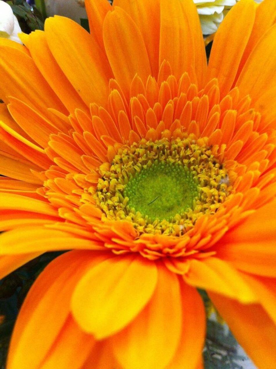 Urban Spring Fever EyeEm Nature Lover EyeEm Best Shots EyeEmBestPics EyeEm Flower Eyeemspring Eyeemyellow