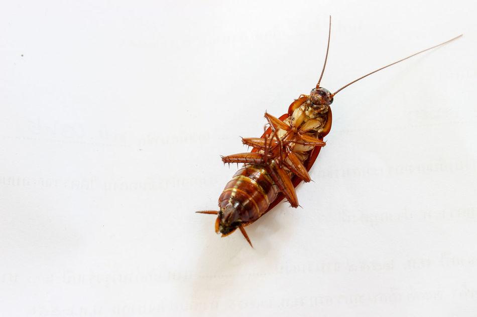 Beautiful stock photos of cockroach, Animal Antenna, Animal Themes, Cockroach, Copy Space