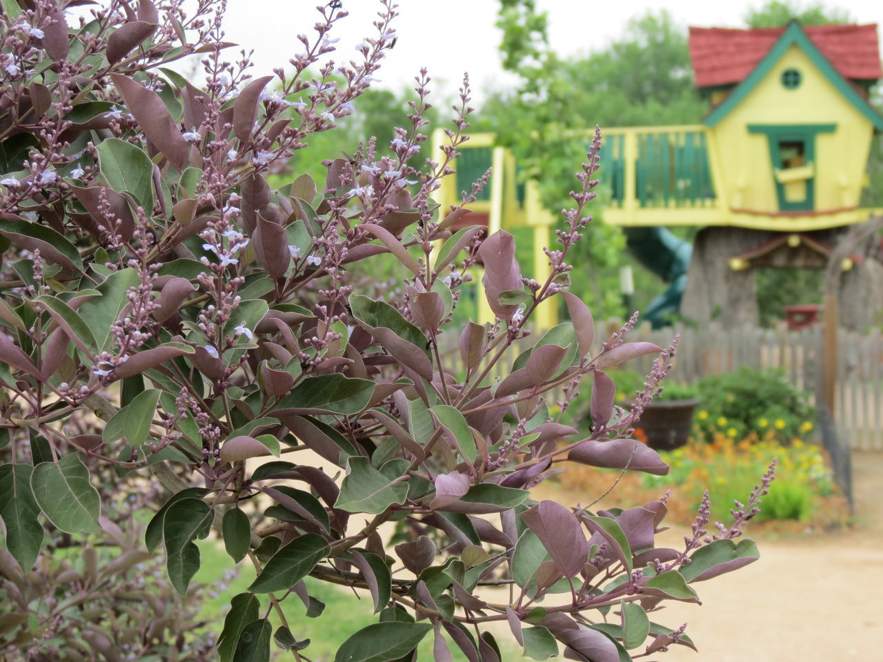 Animal Themes Architecture Beauty In Nature Building Exterior Built Structure Childrens Play Close-up Day Flower Growth Hobbies Nature No People Outdoors Plant Plant Play Structure Tree Vitex Agnus Castus