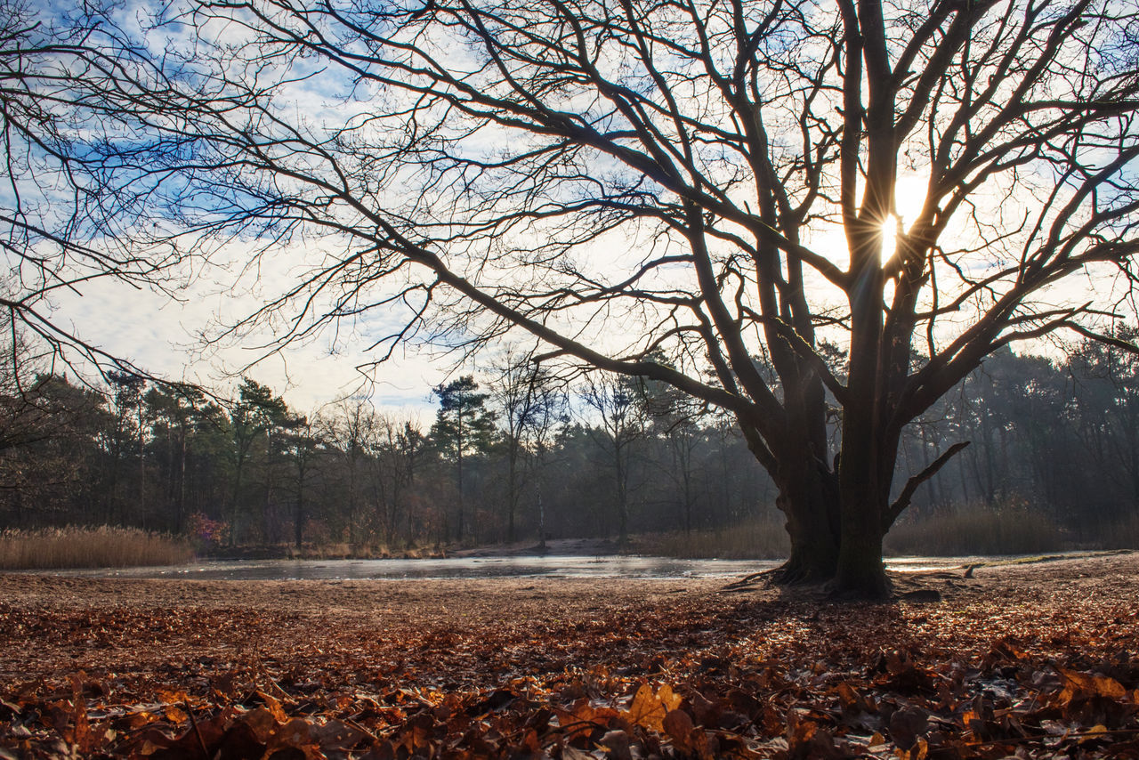 Bare Tree Beauty In Nature Branch Day Flare Landscape Low Angle Low Angle View Nature No People Outdoors Scenics Sky Sunflare Sunrise Sunset Tree