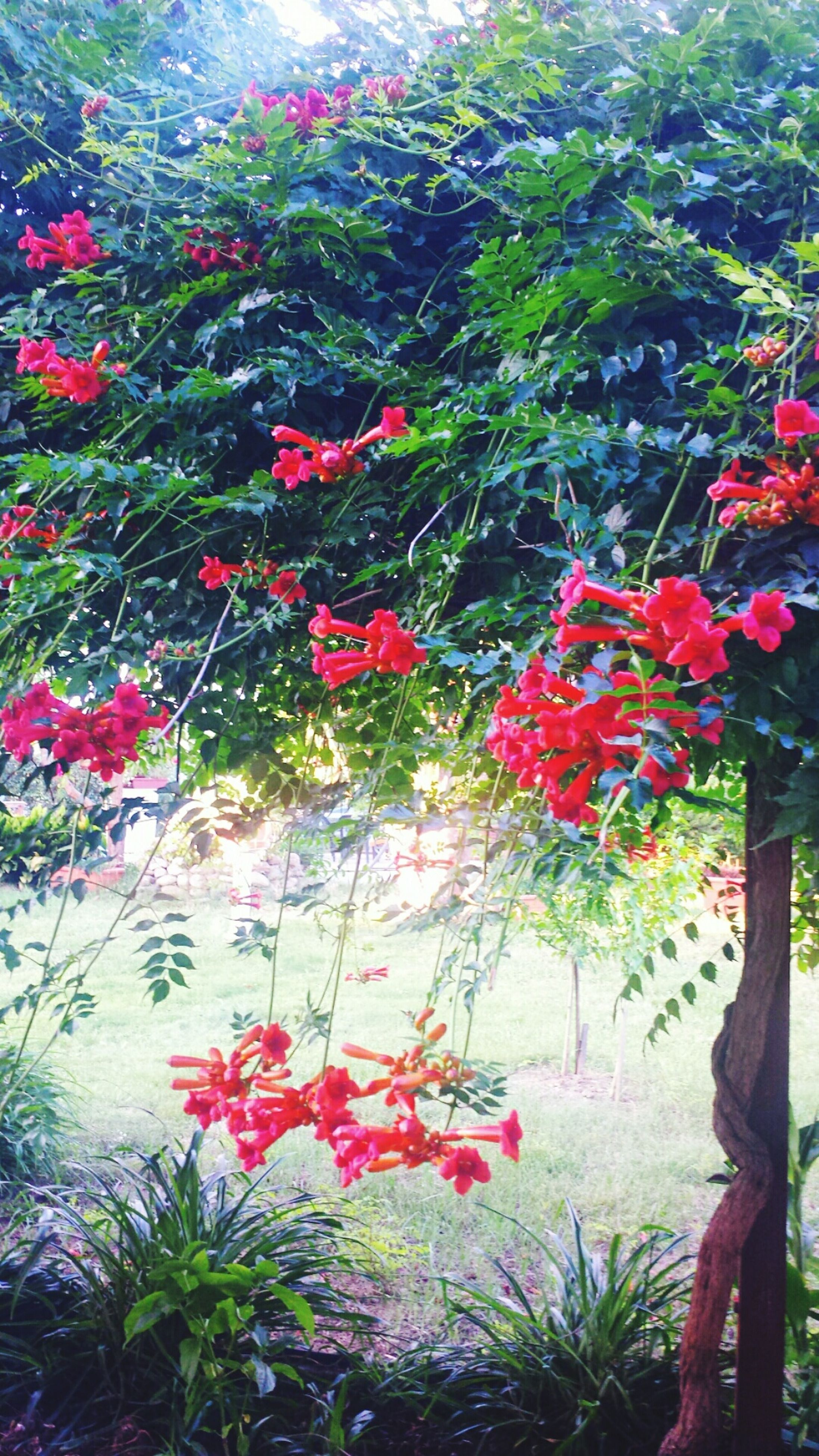flower, freshness, growth, red, plant, beauty in nature, fragility, nature, petal, blooming, in bloom, tree, blossom, high angle view, day, outdoors, sunlight, pink color, growing, green color