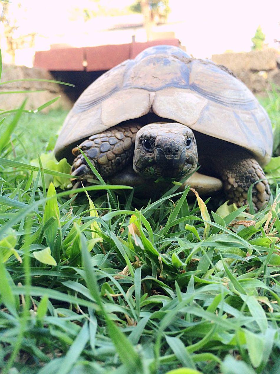 Nature Animal Turtle Turtlesitter Turtles Lookatme Animals Tartaruga Slow