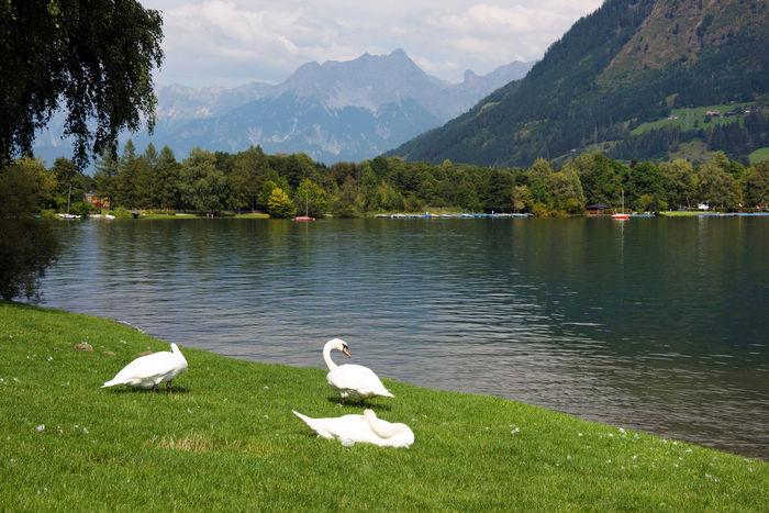 Nikon D810 Austria Mountains Austria ❤ Austrian Alps Day Europe Lake Landmark Landscape Landscape_Collection Landscape_photography Outdoors Scenery Travel Travel Destinations Zell Am See