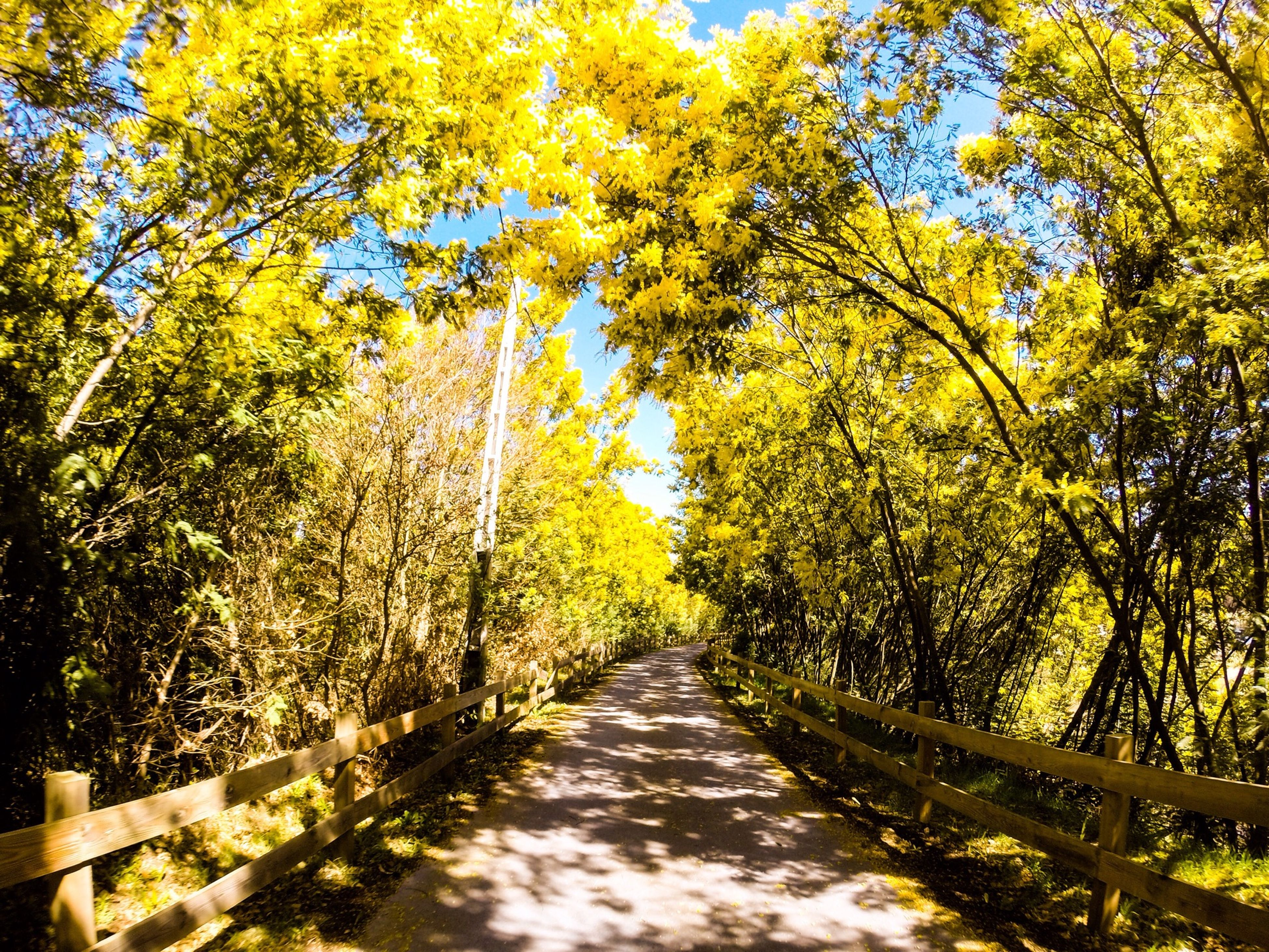 tree, the way forward, diminishing perspective, tranquility, autumn, vanishing point, beauty in nature, nature, growth, branch, tranquil scene, change, forest, scenics, treelined, season, transportation, yellow, road, footpath