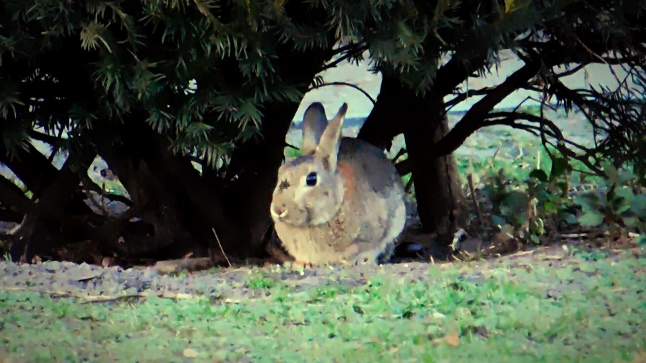 animal themes, one animal, mammal, animals in the wild, domestic animals, looking at camera, nature, no people, outdoors, day, grass, portrait, close-up, tree