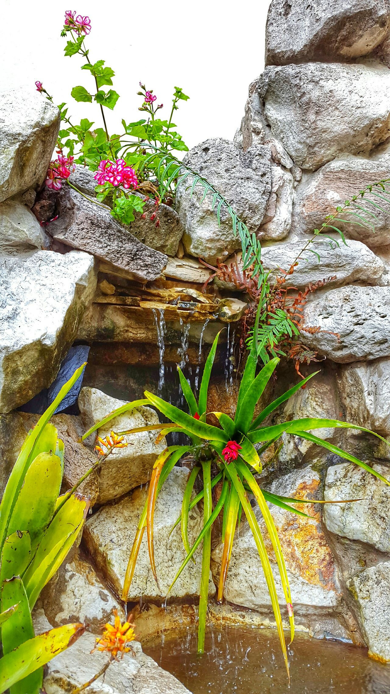 Water_collection Piedras Agua Fuente Fuente❤Agua 🌷 Flowers 🌹 Flowers, Nature And Beauty EyeEm Best Shots - Flowers Spring Flowers Flowers,Plants & Garden