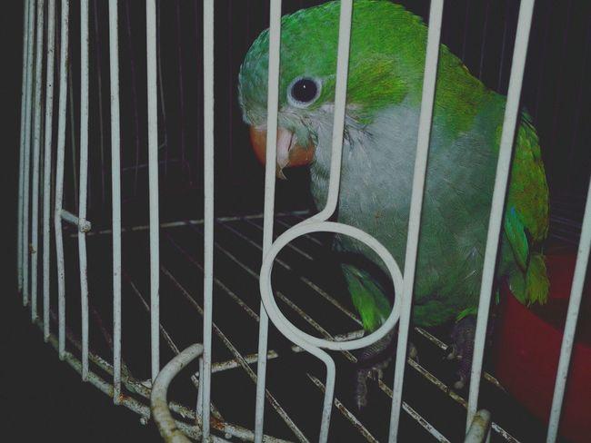 Polly Want A Cracker ?