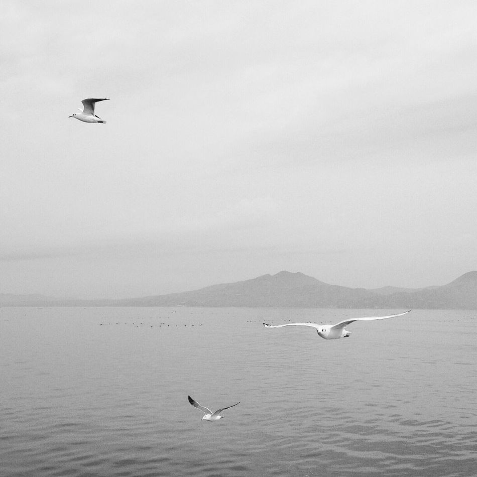 Seagulls in flight Monochrome Tranquility Black And White Nature Seagull In The Air Bird Tranquil Scene Seagulls In Flight Clouds And Sky Sea IPhoneography Beauty In Nature Sky Scenics Spread Wings Flying Seagull Ferry Views Calm Sea Day Japan