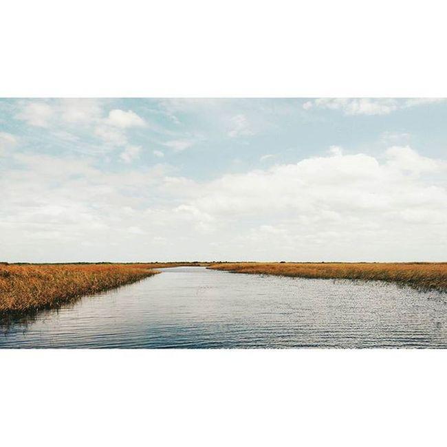 Landscape 🐊 . . . Everglades  Noaligatorsinmyway Sunday Fam Miami River Natgeo Airboat Trip