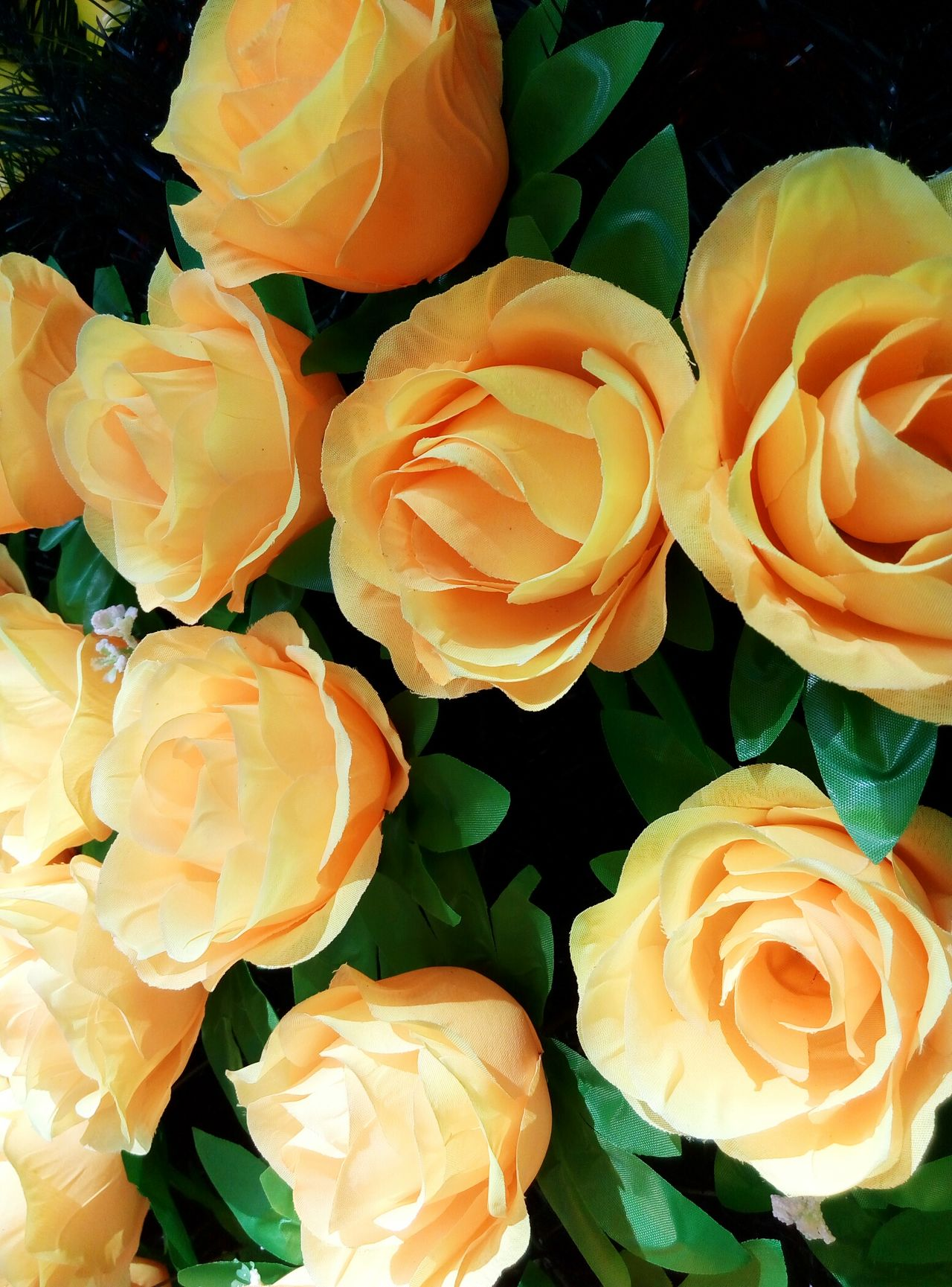 Roses Flowers Wellow Lovely Relaxing Nature Summer Inlove Beauty Beauty In Nature