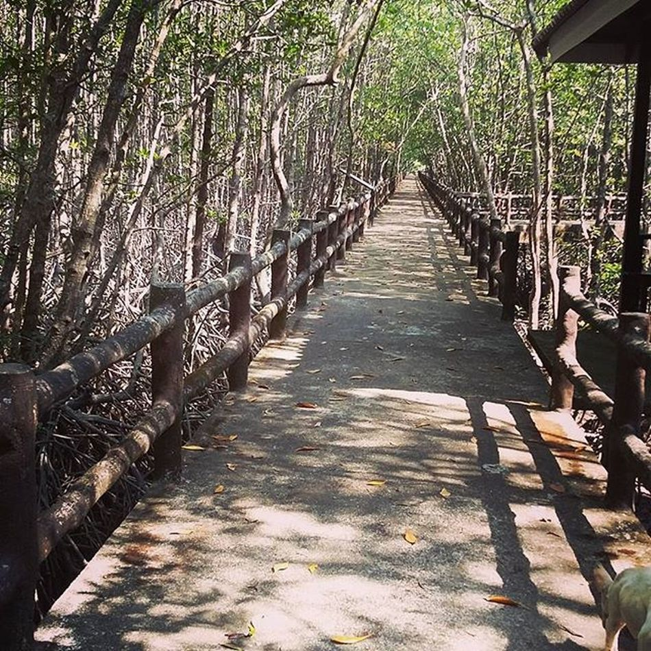 Path Walkwithme Nature Shadow Green Twinklyjourney Bless