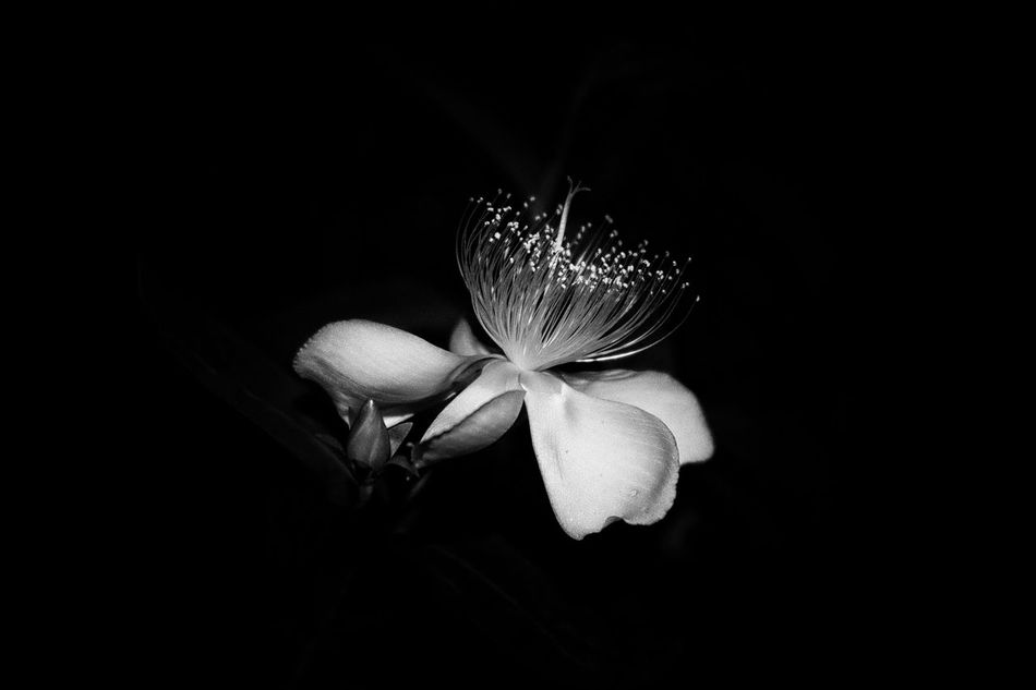 Beautiful stock photos of nacht, Beauty In Nature, Black Background, Bloom, China