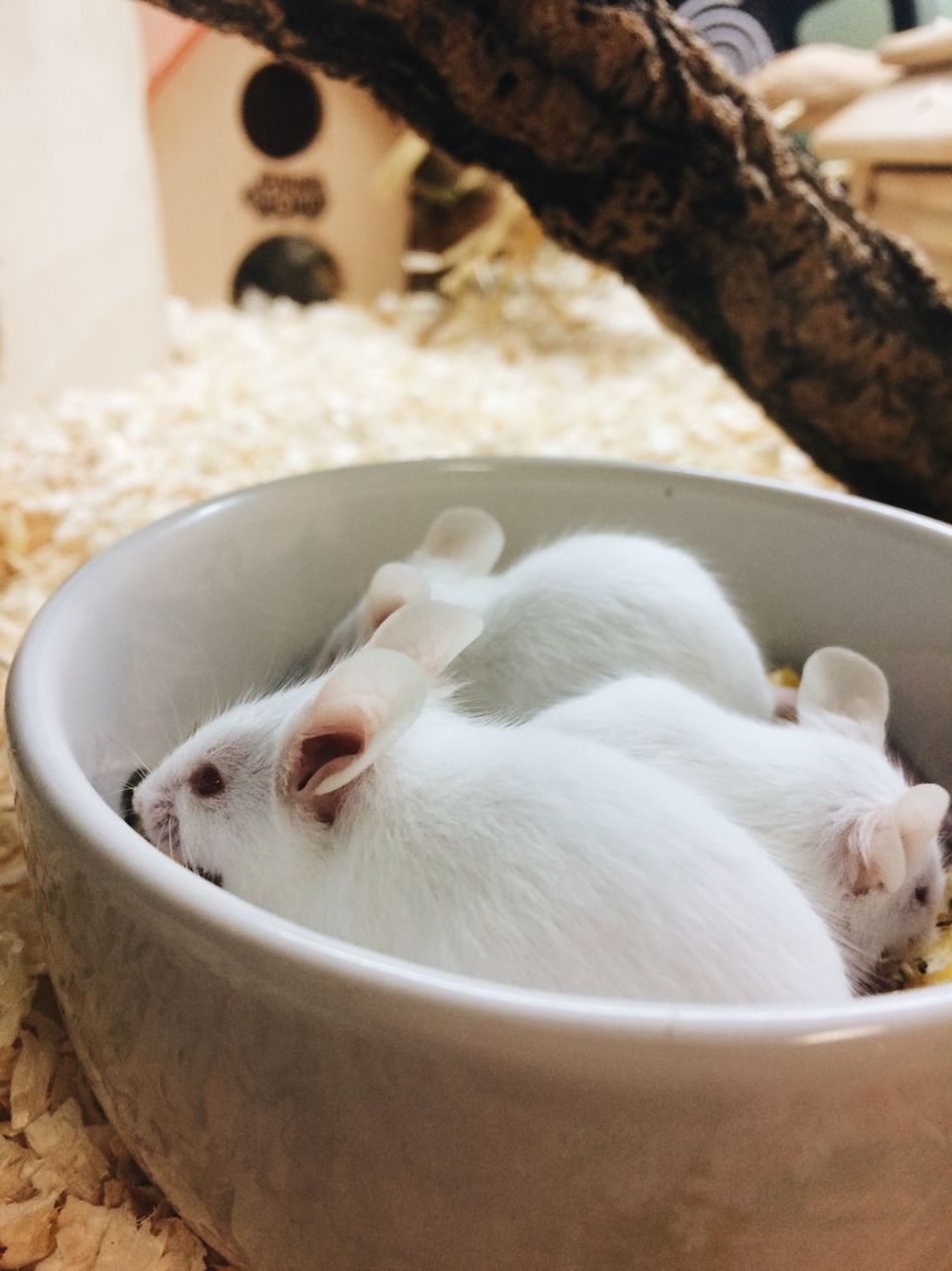Beautiful stock photos of mouse, Animal Themes, Berlin, Bowl, Domestic Animals