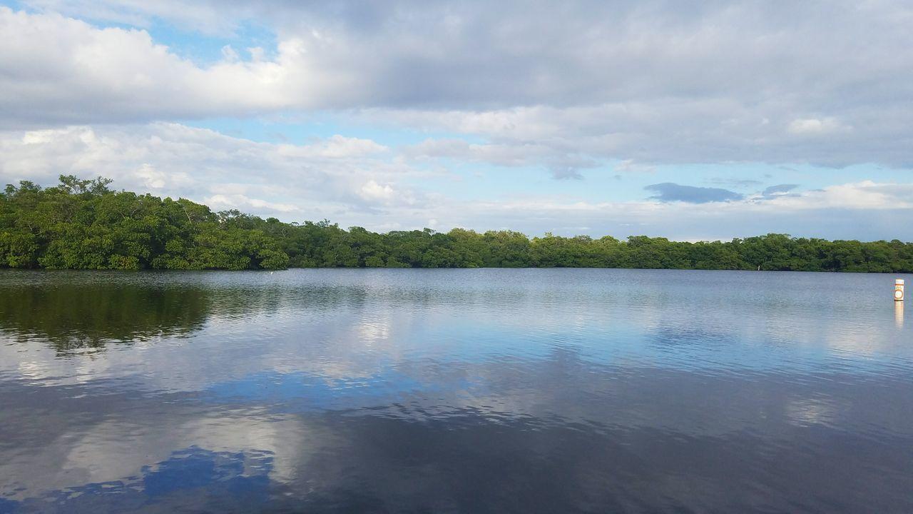 Florida Florida Life Mangrove Mangrove Forest Mangroves Water Harbor Green Vacation Travel Clarity
