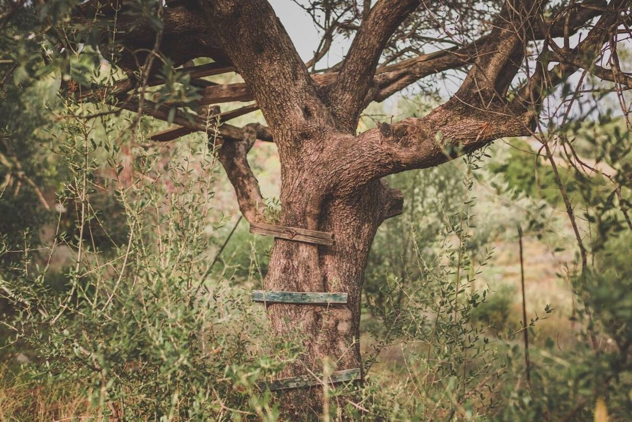 tree, no people, nature, growth, day, outdoors, tree trunk, branch, grass, beauty in nature, animal themes