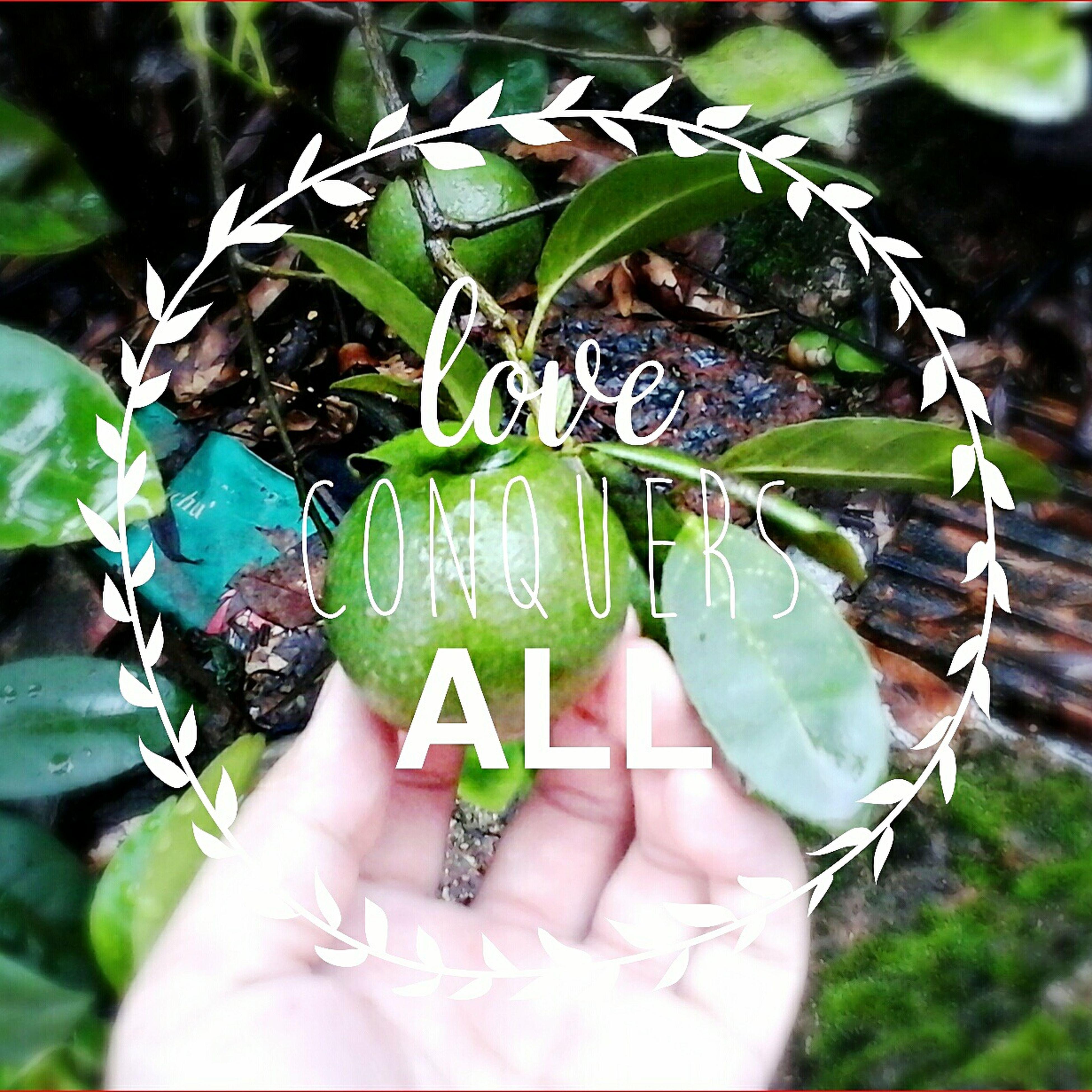 person, holding, part of, close-up, leaf, personal perspective, cropped, human finger, unrecognizable person, focus on foreground, lifestyles, leisure activity, green color, showing, plant, day