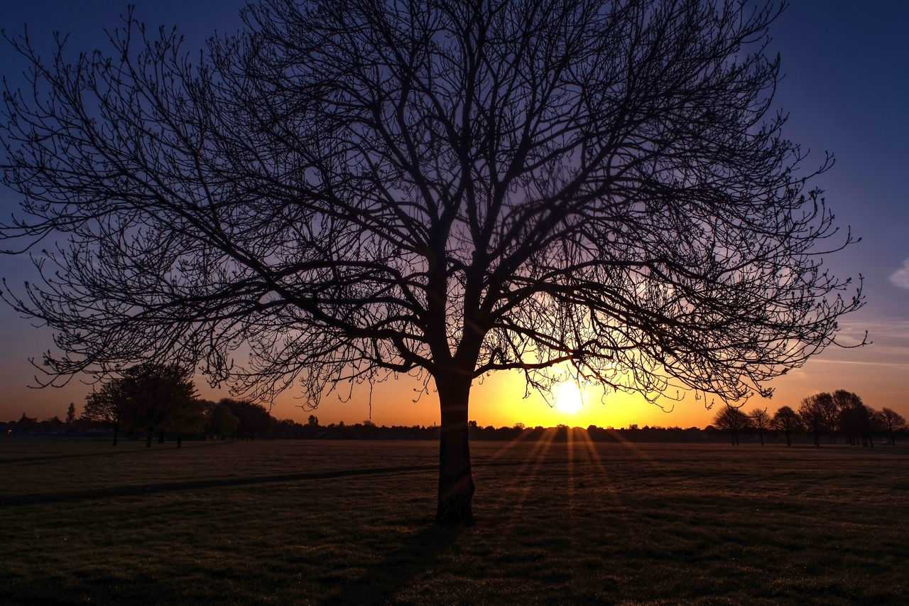Bare Tree Beauty In Nature Dawn Dawn Collection Eyeem Market Team Field Getty Image-collection Idyllic Landscape Nature No People Outdoors Peaceful Moment Rural Scene Scenics Silhouette Sky Solace Soulful Sun Sunlight Sunset Tranquil Scene Tranquility Tree