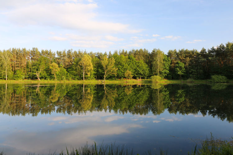 Reflection Tree Water Lake Nature Scenics Sky Outdoors Tranquility No People Beauty In Nature Forest Day Symmetry Landscape Canon EOS 5D MarkIII Canonphotography Canon_photos Canon5Dmk3 Canon5dmarkiii Beauty In Nature Vacations Nature