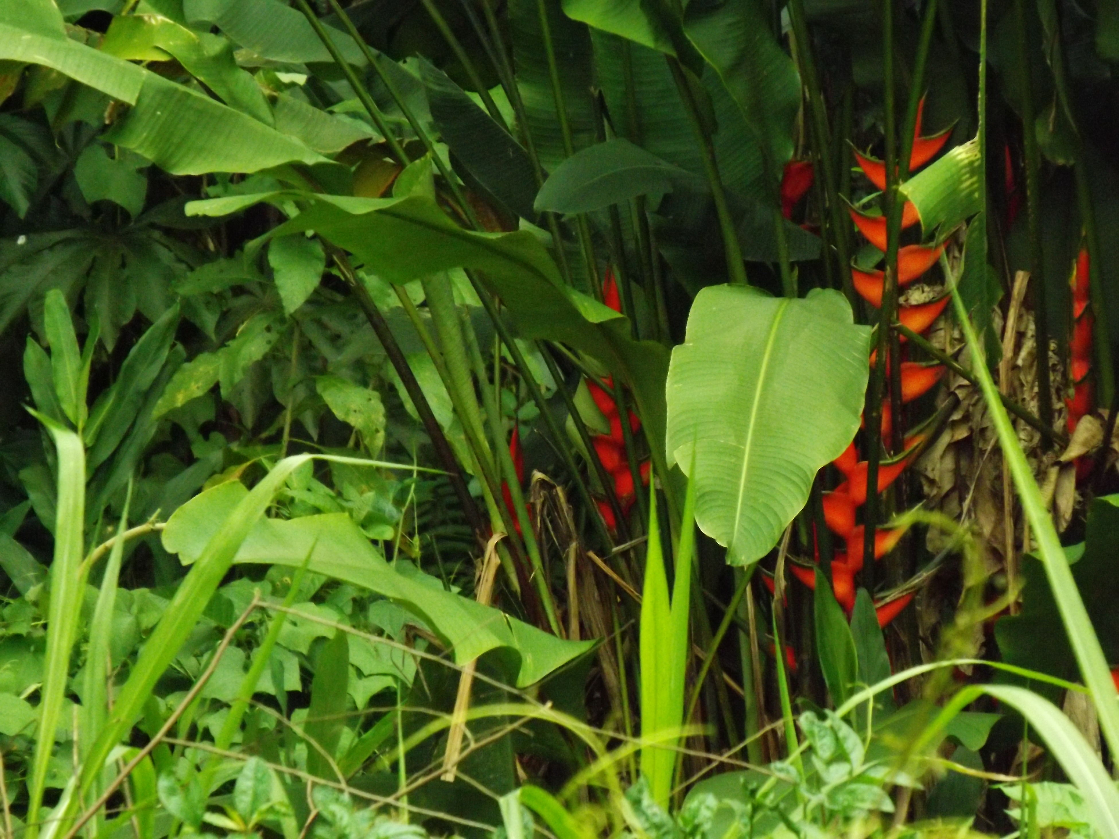 growth, green color, plant, red, leaf, nature, field, freshness, beauty in nature, grass, growing, close-up, day, outdoors, tranquility, green, no people, lush foliage, stem, agriculture