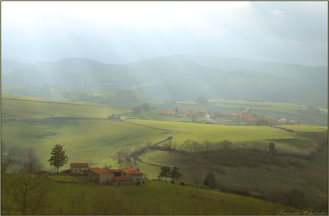 Agriculture Beauty In Nature Crop  Day Farm Field Fog Landscape Nature No People Outdoors Plant Rhonealpes Rhône Rice Paddy Rural Scene Scenics Sky Social Issues Tranquil Scene Tree