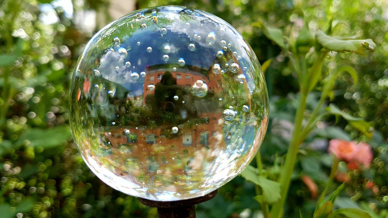 transparent, fragility, sphere, reflection, bubble, close-up, focus on foreground, shiny, no people, bubble wand, day, outdoors, crystal, nature, tree