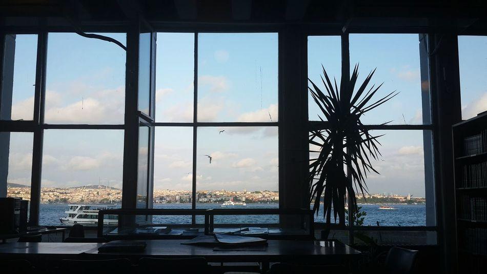 📑📗📘📙📚 Mimarsinanuniversity MSGSU Sunlight Sky Sea Seagulls Bookstore Kutuphane Istanbul Turkey Vscocam