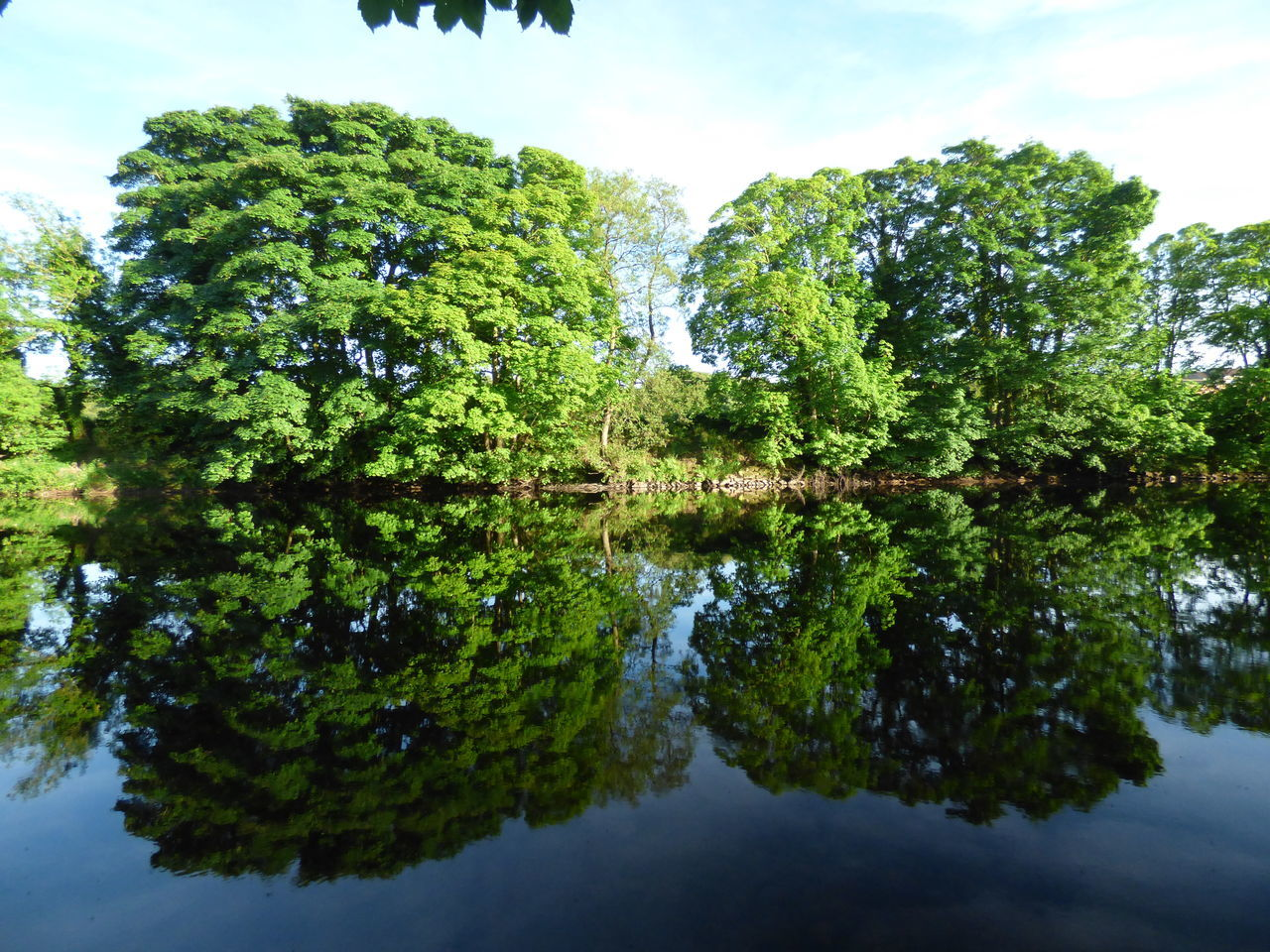 River reflection Tree Reflection Water Nature Outdoors Growth No People Sky Lake Day Beauty In Nature Tranquility Popular Photography Low Angle View Scenics Popular Photos Beauty In Nature Nature Tree Reflection