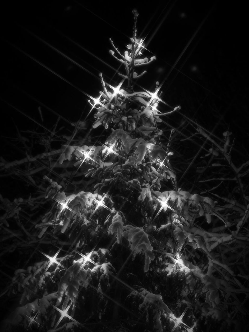 Once a year, i take out my fathers old star filter and use it on my vintage zuiko 50mm F1.4... its a great way to remember one lovedand missed. Black Background No People Night Indoors  Close-up Christmas Decorations Christmas Tree Christmas Lights Shallow Depth Of Field Star Filter Blackandwhite Black And White Black & White Monochrome