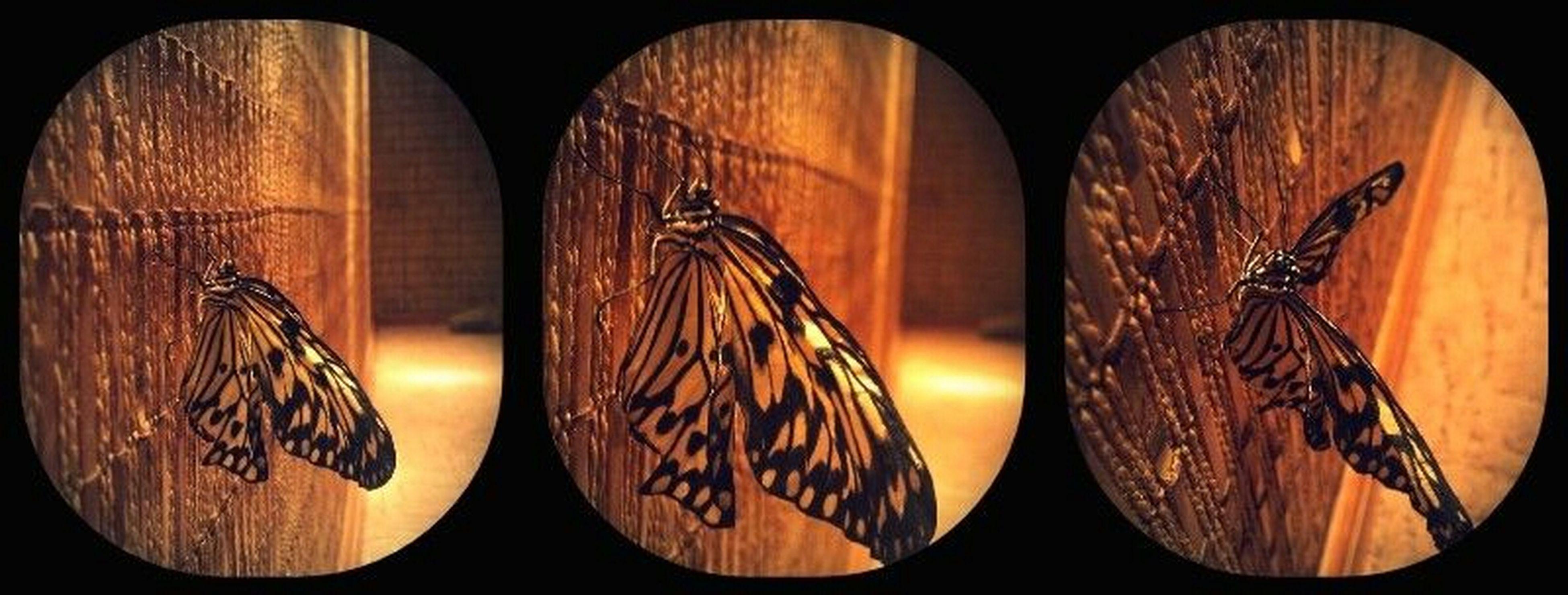 circle, orange color, illuminated, close-up, night, pattern, indoors, no people, hanging, geometric shape, electricity, yellow, shape, decoration, design, wood - material, lighting equipment, glowing, sunset