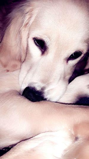 DogLove I Love Pets Petstagram Dog