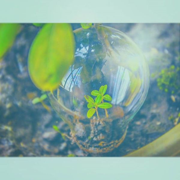 The pic was clicked for the world photography day...enjoyed a lot.. To get this click... Saveplants Gogreen Glassbulb Evergreenstate Photographysouls Photographyday Justclick Noselfie Savetheplanet 😘😘happy 😚