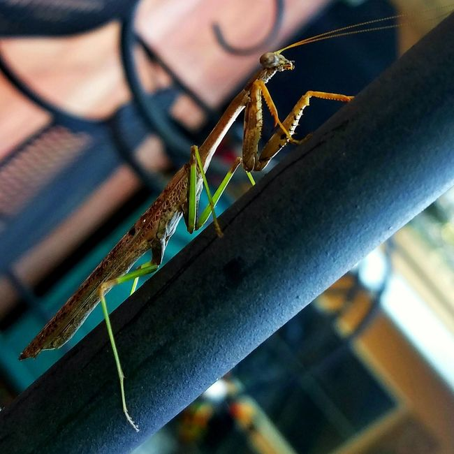 Close-up Selective Focus Beauty In Nature Mantis Differential Focus Bug Animal