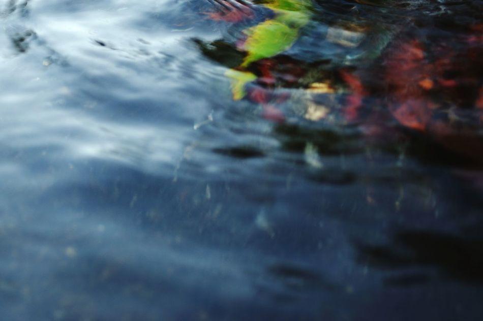 Water Reflection No People Low Angle View EyeEm Gallery Japan Photography EyeEm Best Shots 水辺 ゆらぎ EyeEmBestPics EyeEm