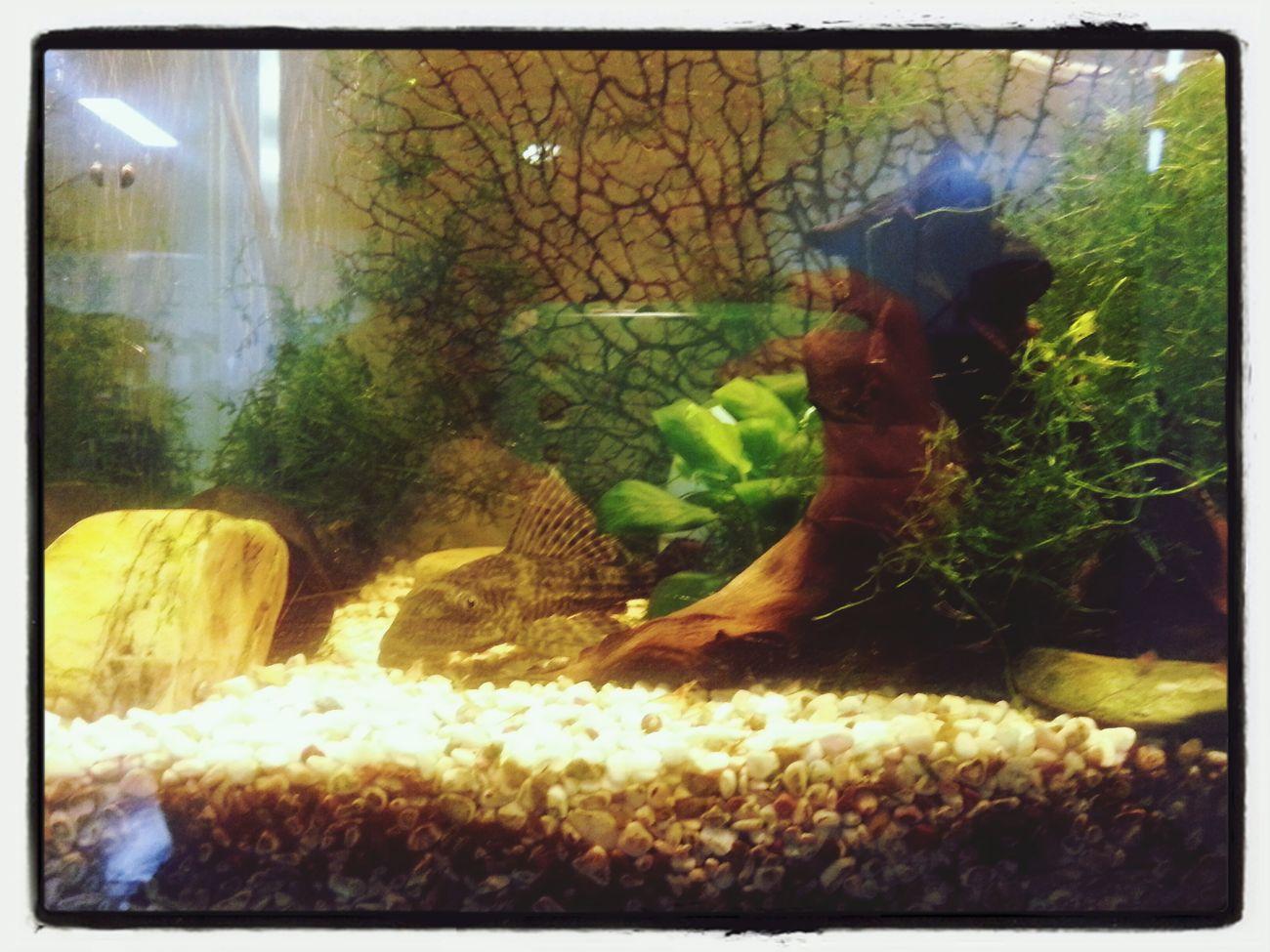 Fish... Fish