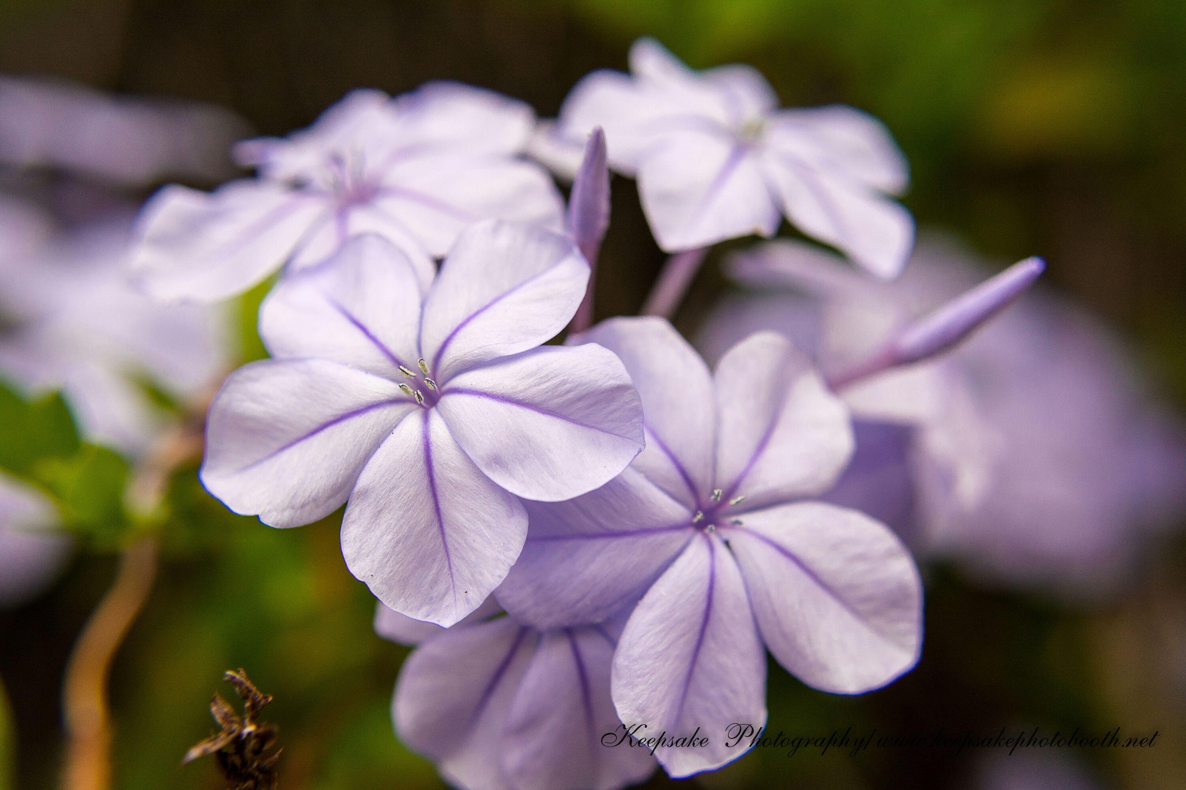 flower, petal, fragility, freshness, flower head, growth, focus on foreground, close-up, beauty in nature, nature, plant, blooming, in bloom, selective focus, day, outdoors, blossom, stem, no people, botany