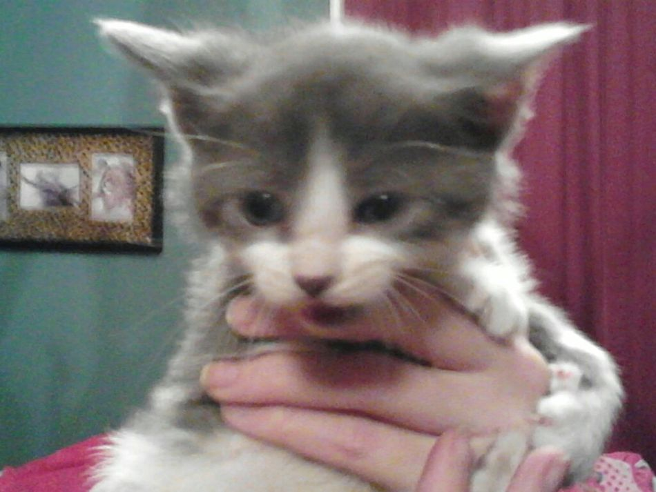 Daddy brought the girl's home a kitten for Valentine's Day! They've named him Sebastian