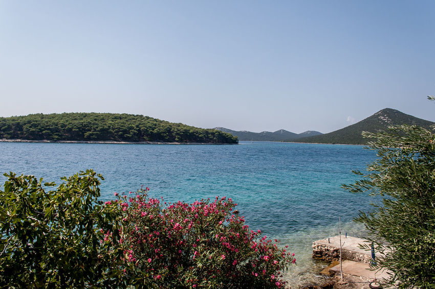 Croatia Otok Molat Beauty In Nature Blue Clear Sky Dalmatia Day Flower Growth Landscape Nature No People Outdoors Plant Scenics Sea Sky Tranquil Scene Tranquility Travel Destinations Tree Vacations Water