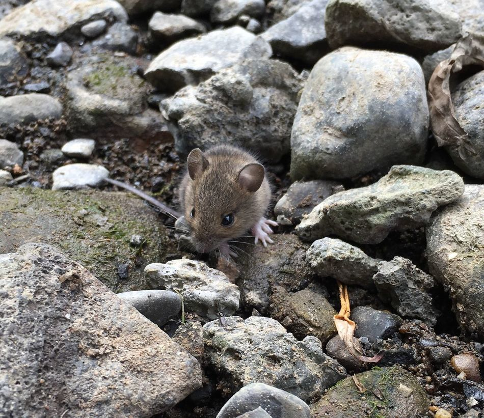 Eeeeek Stuartlittle Mouse Ironbridge  Telford RiverSeven Fishing