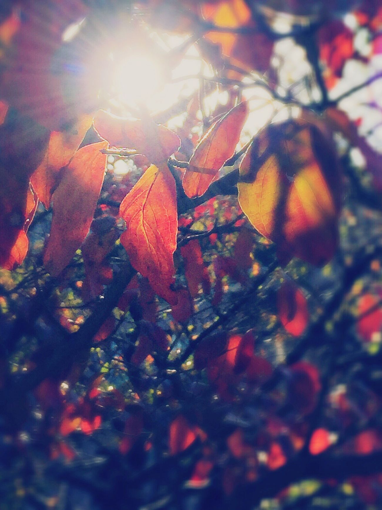 🎵Rebirth (Vancouver Sleep Clinic) Autumn Autumn Colors Autumn Leaves Colored Leaves On The Way Daydreaming Daydream Masako201611 Shadow Shadows & Lights