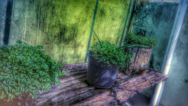 Green HDR Hdr_Collection Green Leaves Mobile Photography Xperiaz Hdrphotography Nature Agudos-sp Taking Photos