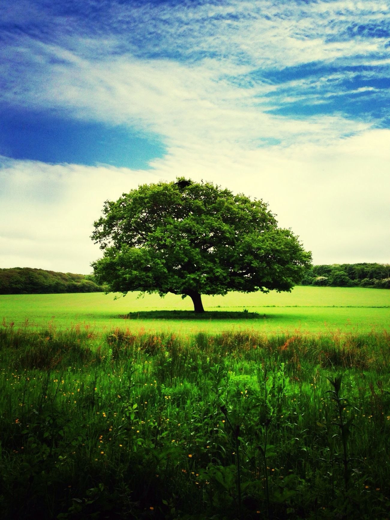 Green Earth The Environmentalist – 2014 EyeEm Awards NEM Landscapes NEM Green