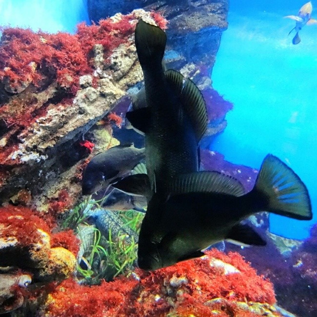 Fish Aquarium Fishtank Tagsforlikes Fishporn Instafish Instagood Swim Swimming Water Coral Reef Reeftank Tropical TropicalFish Aquaria Photooftheday Saltwater Freshwater Beautiful Ocean Watertank