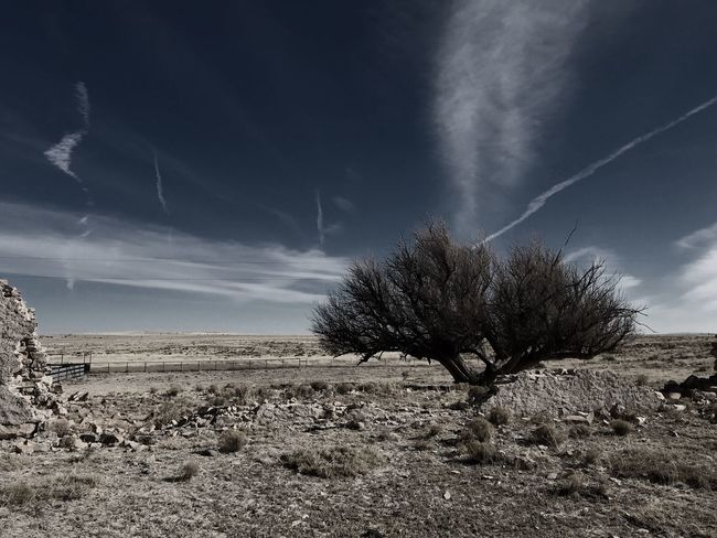 """""""Mystery Ranch No. 7"""" The Sentinel. Mystery New Mexico Photography New Mexico New Mexico Skies Abandoned Places Trees Landscape Sky Tranquility Nature Tranquil Scene Scenics Beauty In Nature Cloud - Sky Tree"""