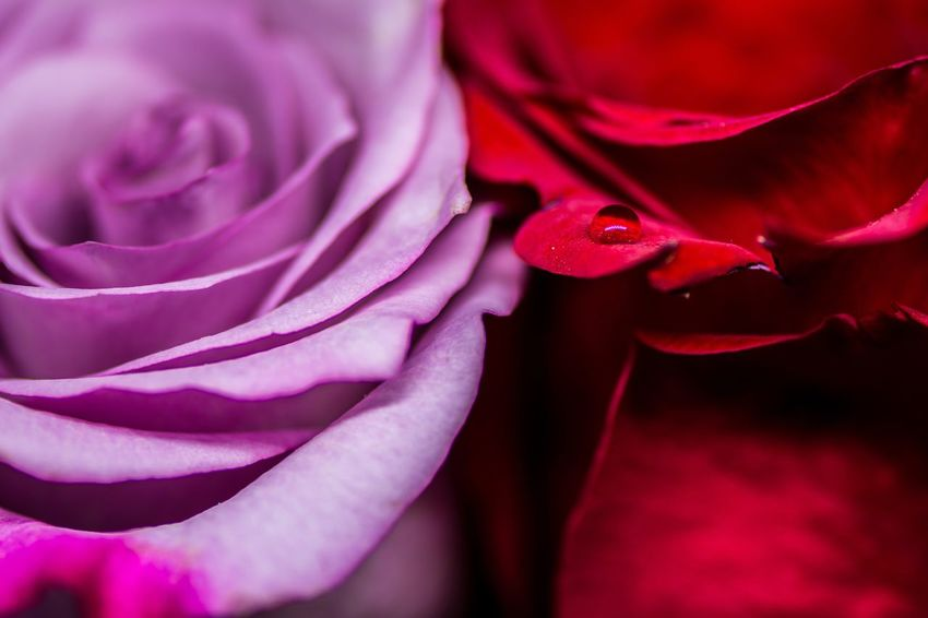 First Eyeem Photo Flower Colors Nature Rose - Flower Macro Photography Nikonphotography Nikonphotographer NikonD7100 Nikon105mmf2.8macro Iso100 F 2.8 Nikon