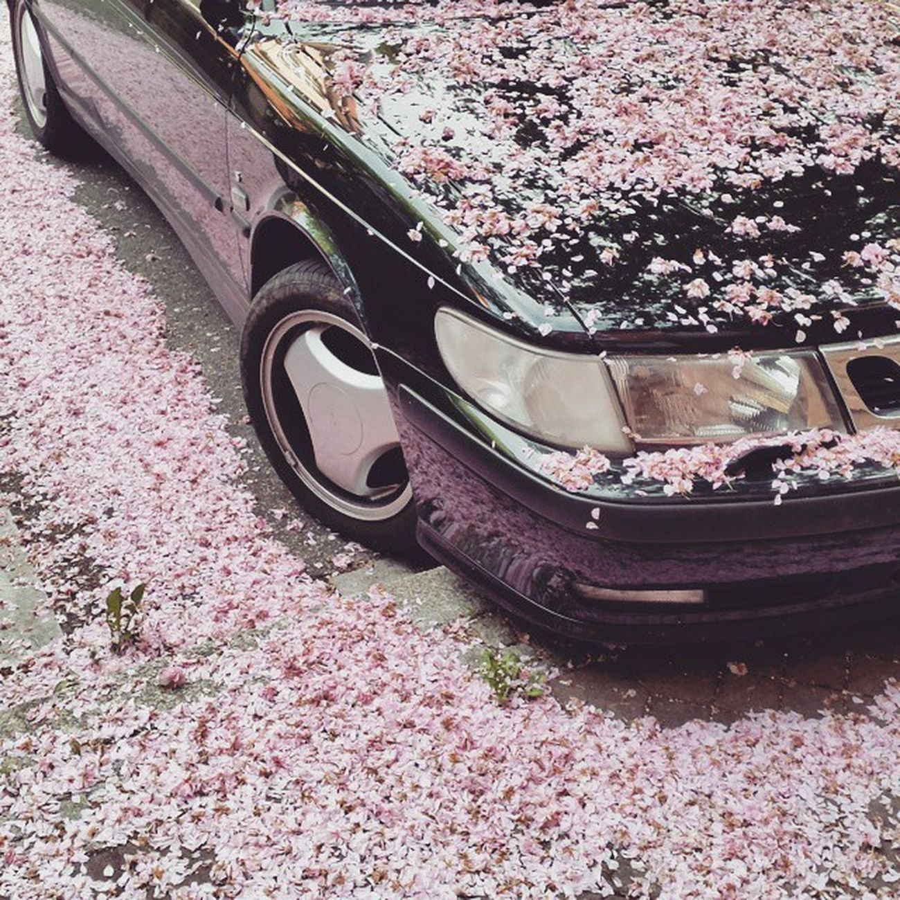 VSCO Vscocam Saab Spring Cherryblossom Car Blossom Offenburg 😚