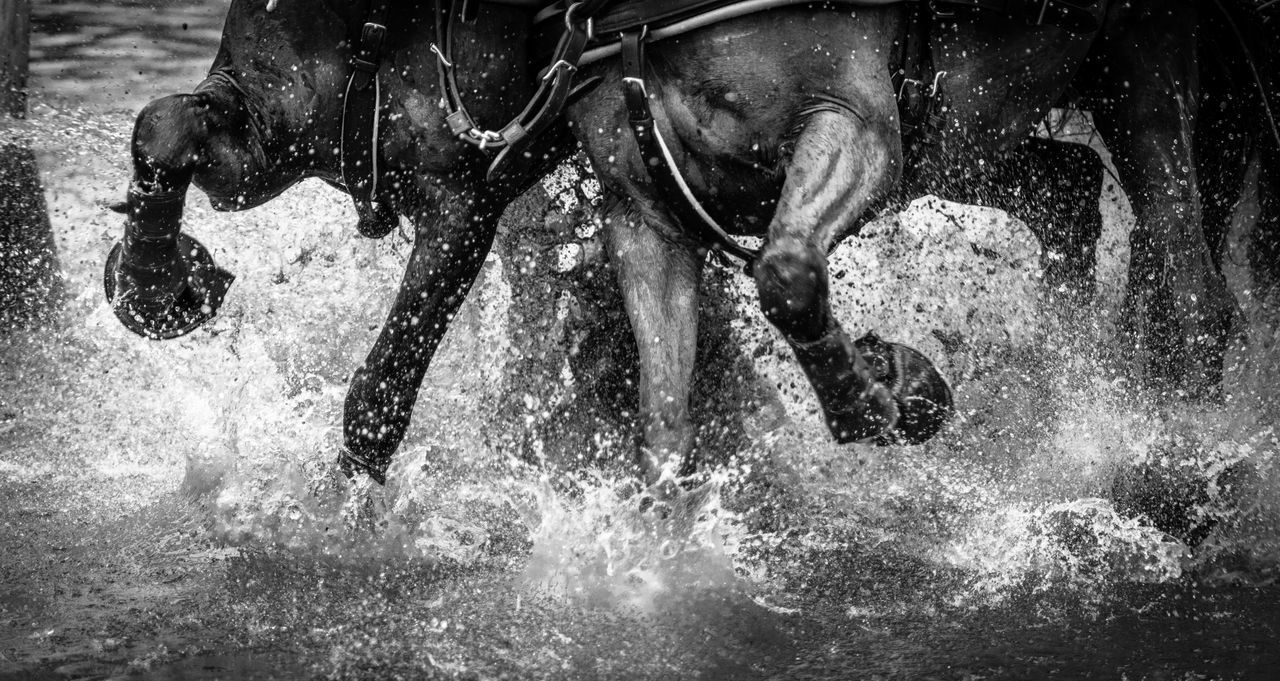 Yeehaaaa / Action Animals Black Close-up De Domestic Animals Energy EyeEm Best Shots EyeEm Best Shots - Black + White Fortheloveofblackandwhite Horses Legs Monochromatic Monochrome Motion Muscles Nature Part Of Power In Nature Shootermag Splash Splashing Sports Water Capturing Motion